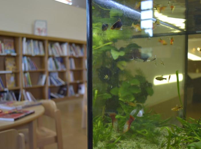 bibliotheque-enfant- (12)